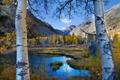 Картинка березы, облака, осень, небо, озеро, листья, деревья