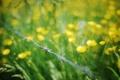 Картинка лето, трава, макро, цветы, проволока, желтые