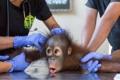 Картинка monkey, fear, fright, latex gloves, veterinarians
