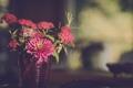 Картинка цветы, лепестки, ваза