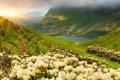 Картинка трава, солнце, цветы, горы, озеро, nature, луга