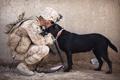 Картинка друг, собака, солдат