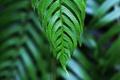 Картинка зелень, лист, макро