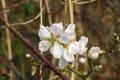 Картинка цветок, макро, весна, цветение