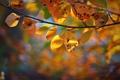 Картинка осень, листья, ветка, боке