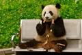 Картинка медведь, панда, скамья
