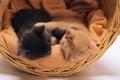 Картинка кошки, корзина, котята