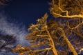 Картинка зима, небо, звезды, свет, деревья, ночь, ветки