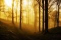 Картинка лес, пейзаж, туман, природа, свет, утро