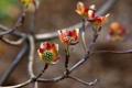 Картинка цветы, природа, дерево, ветка, лепестки
