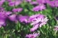 Картинка цветы, лепестки, много