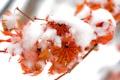 Картинка зима, осень, листва, winter, Fire and snow