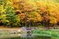 Картинка осень, деревья, пейзаж, мост, природа, озеро, Landscape