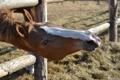 Картинка морда, лошадь, забор