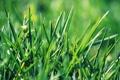 Картинка зелень, трава, листья, макро, зеленое