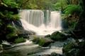 Картинка лес, деревья, река, камни, водопад, поток