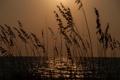 Картинка море, небо, трава, закат, растение