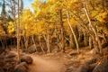Картинка осень, лес, деревья, камни, тропа