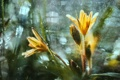 Картинка капли, цветы, брызги, желтые