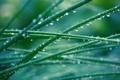Картинка трава, утро, роса