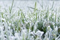 Картинка зелень, трава, снег, иний