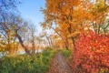 Картинка осень, лес, небо, деревья, река, тропинка