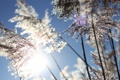 Картинка трава, солнце, макро, природа, фото, рассвет, растения