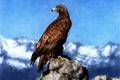 Картинка птица, рисунок, арт, орёл