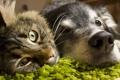 Картинка животные, кот, взгляд, собака, дружба, мордочки
