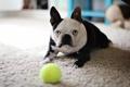Картинка дом, мяч, собака