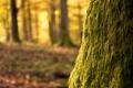 Картинка мох, ствол, the tree, дерево