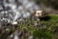 Картинка лес, природа, гриб