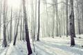 Картинка лес, роща, мороз, природа, снег, зима