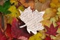 Картинка осень, листья, autumn reading