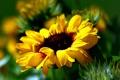 Картинка цветок, желтый, размытость