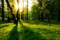 Картинка green, nature, three