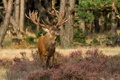 Картинка лес, природа, олень