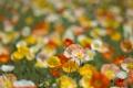 Картинка поле, природа, маки, лепестки, луг