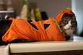 Картинка кошка, одежда, костюм