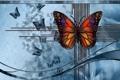 Картинка абстракция, бабочка, цвет, форма
