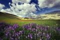 Картинка горы, пейзаж, поле, цветы