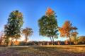 Картинка осень, небо, трава, лучи, деревья, закат