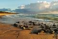 Картинка волны, камни, ветер, берег, горизонт, австралия