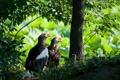 Картинка растения, природа, белоплечие- орланы, деревья, птицы