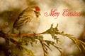 Картинка птица, ветка, поздравление