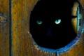 Картинка глаза, кот, взгляд, котэ, лазейка