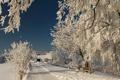 Картинка зима, дорога, снег, ветки, природа