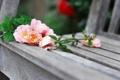Картинка цветы, розы, скамья