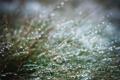 Картинка трава, капли, макро, дождь