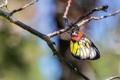 Картинка цвета, макро, веточка, бабочка, ветка, крылышки